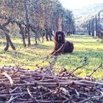 Agriturismo Cani Toscana