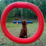 Area giochi per cani