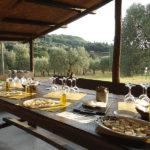 Degustazione Olio in Agriturismo