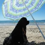 Dog beach Toscana
