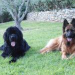 Vacanze con cani Toscana
