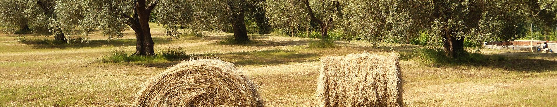 Uliveta Agriturismo Aria Toscana