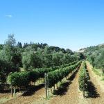 Vigna Azienda Agricola